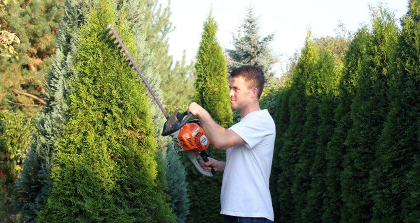 Cięcie drzew ozdobnych – podstawowe zasady
