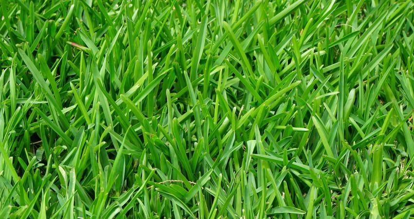 Pielęgnacja trawnika - aeracja