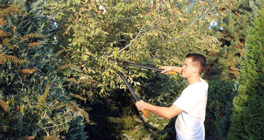 Jak i w jakich okresach przycinać drzewa owocowe?