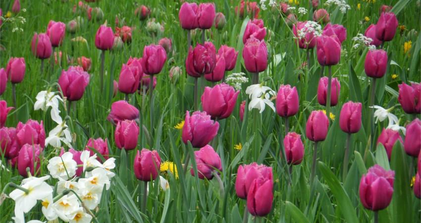 Jak zmienić trawnik włąkę? Kwietna łąka