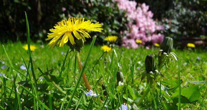 Kwitnąca łąka – marzenie wielu ogrodników