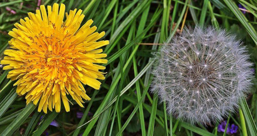 Pozbywanie się niechcianych gości z ogrodu – czyli walka z chwastami