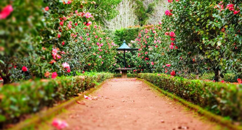 Chodnik ogrodowy - zaplanuj chodnik wogrodzie