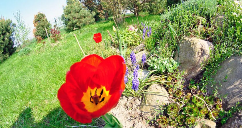 Skalniaki ogrodowe – oaza dla bylin