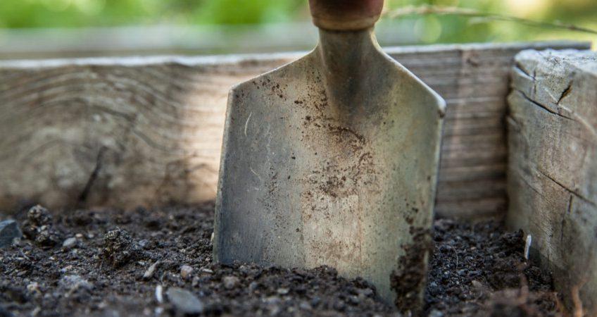 Jak sprawdzić pH gleby w ogrodzie?