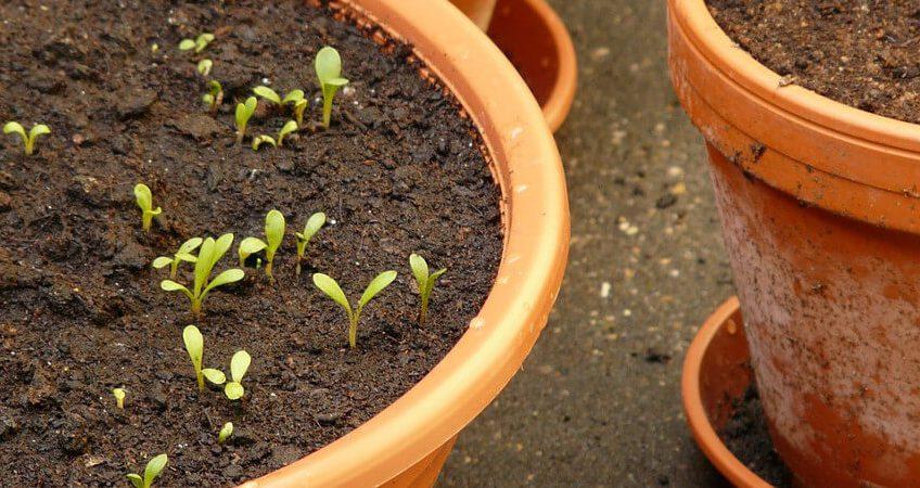 Styczniowe przygotowania do sadzenia roślin