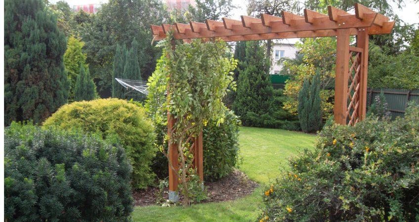 Drzewa w małym ogrodzie - jakie gatunki wybrać?