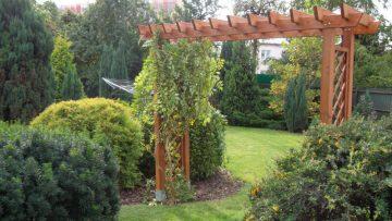 Drzewa wmałym ogrodzie - jakie gatunki wybrać?