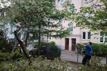 Wycinka, okrzesywanie drzew - Green Solutions Poznań