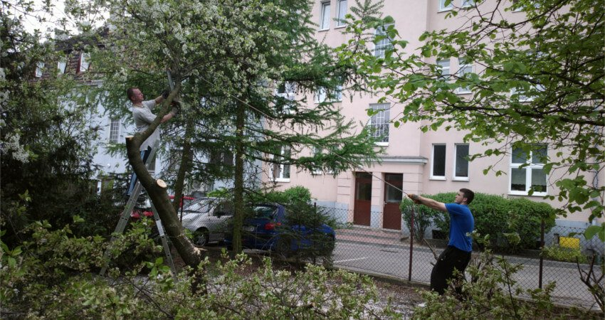 Wycinka, okrzesywanie drzew Poznań