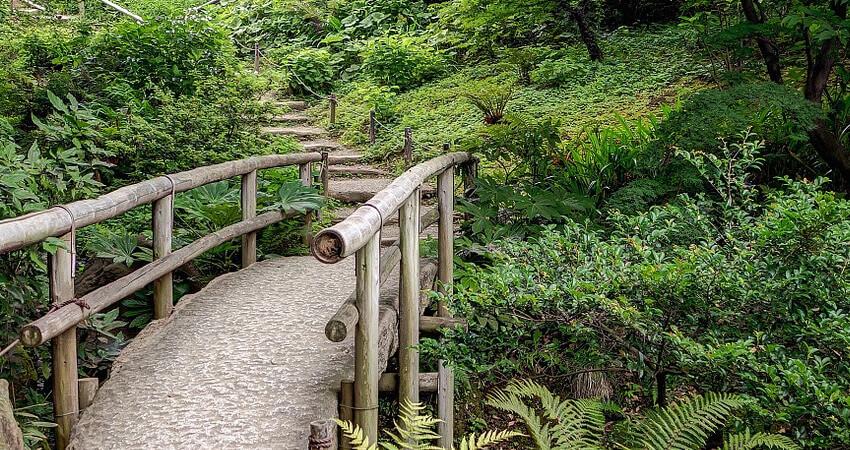 Drzewa ikrzewy wogrodzie japońskim
