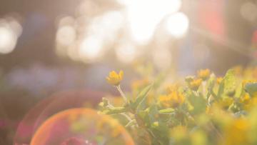 Rośliny nasłońce isuszę