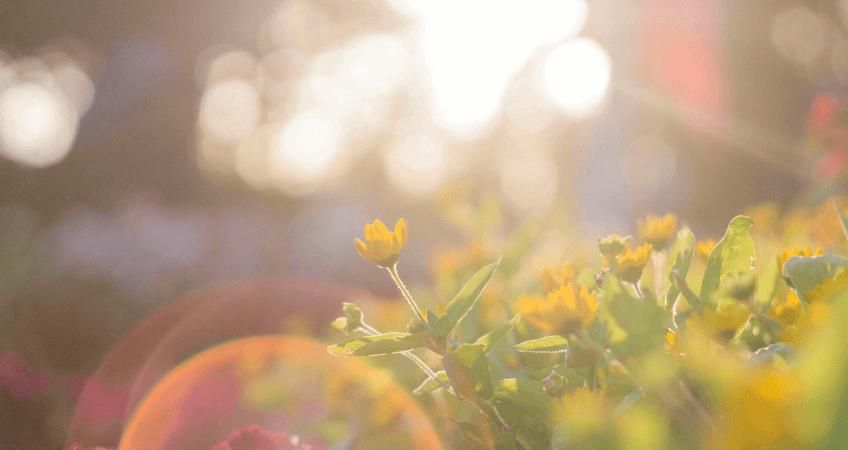 Rośliny na słońce i suszę