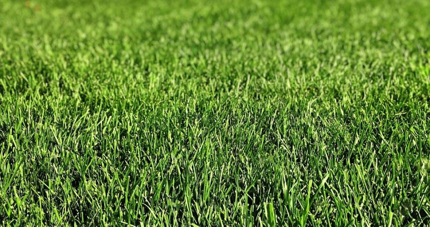 Aeracja trawy