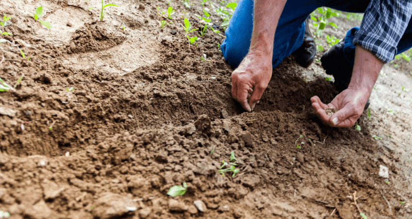 Samodzielne planowanie ogrodu - przydatne porady