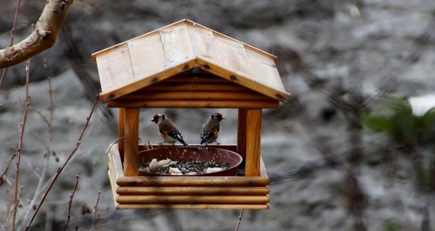 Karmnik w ogrodzie dla ptaków
