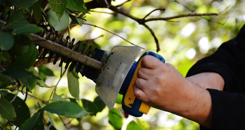 Przycinanie żywopłotu - narzędzia