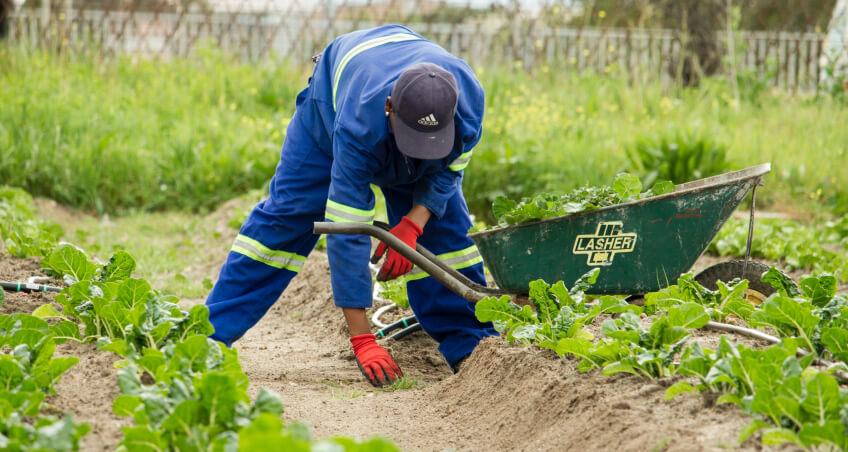 Jak zaplanować ogród warzywny - grządki