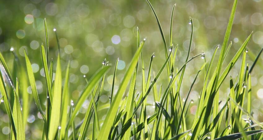 Nawożenie trawy - jak nawozić?