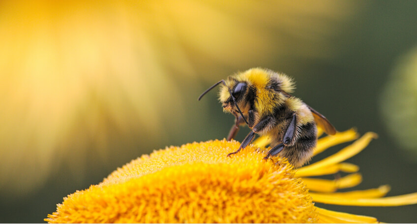 Rośliny miododajne - ogród przyjazny dla pszczół