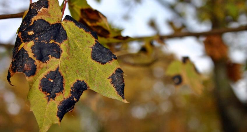 Choroby roślin i szkodniki roślin w ogrodzie latem