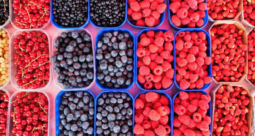 Pielęgnacja krzewów owocowych