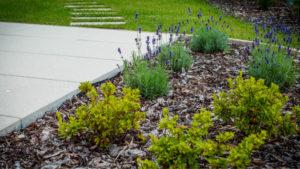 Zakładanie ogrodów - realizacja Green Solutions