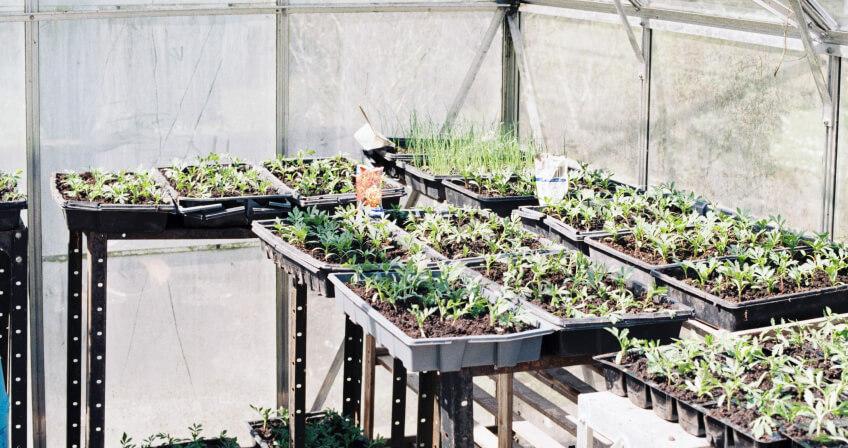 Uprawa warzyw wszklarni wogrodzie