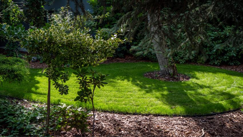Trawnik - zakładanie ipielęgnacja