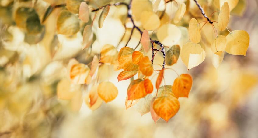 Wrzesień w ogrodzie - prace ogrodowe we wrześniu