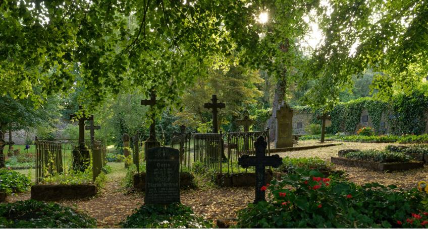 Jakie kwiaty na grób wybrać