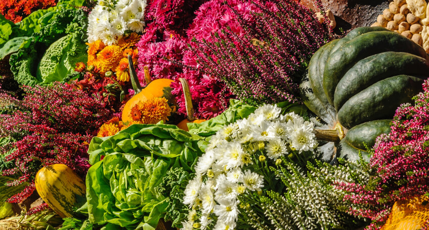 Jesień natarasie - kwiaty