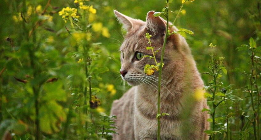 Rośliny bezpieczne dla kota i psa