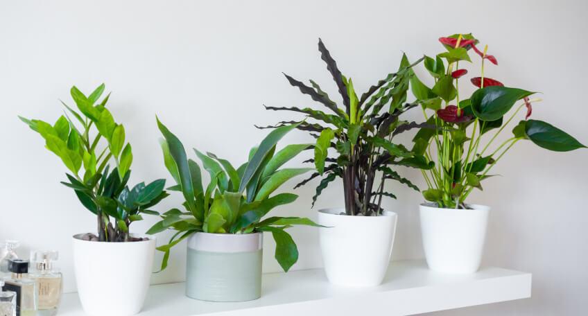 Jak dbać o kwiaty doniczkowe zimą