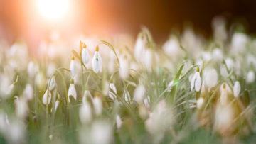 Marzec wogrodzie - kalendarz ogrodnika