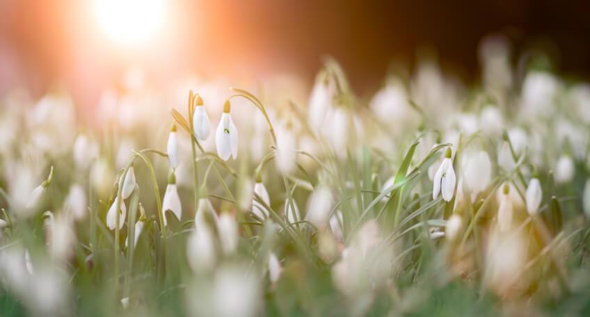 Marzec w ogrodzie - kalendarz ogrodnika