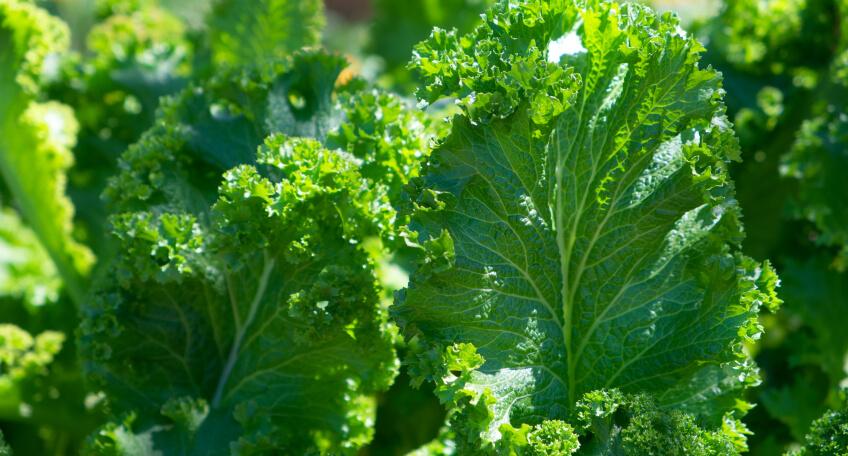 Warzywa - marzec wogrodzie
