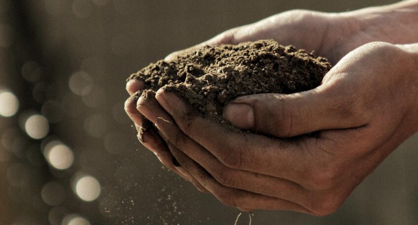 Jak zbadać kwasowość gleby