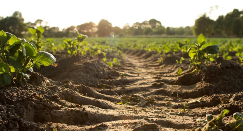 Sprawdzanie kwasowości gleby