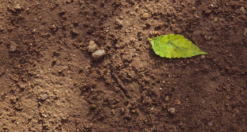 Jak sprawdzić kwasowość gleby domowymi sposobami