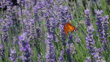Ogród wczerwcu - kwiaty sadzone wczerwcu