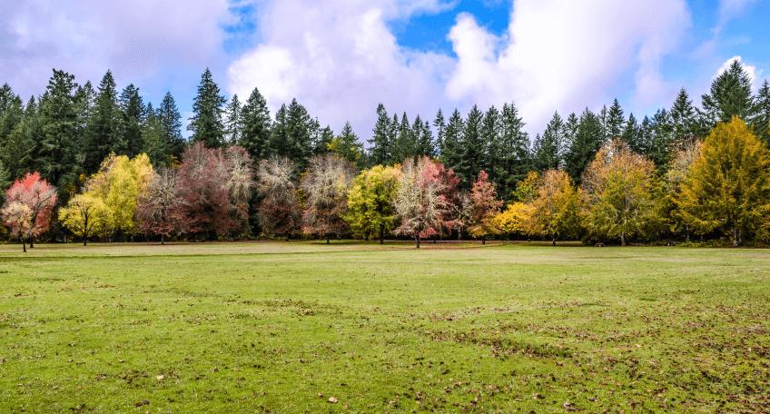 Jesienne nawożenie trawnika