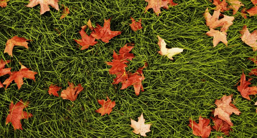 Kiedy nawozić trawnik jesienią