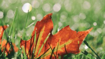 Nawożenie trawnika jesienią